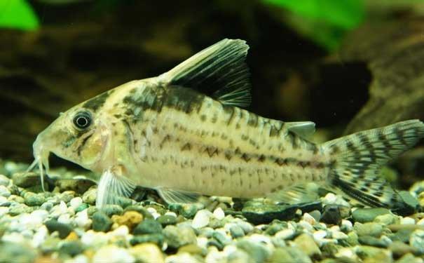 金鱼饲养的水源选择